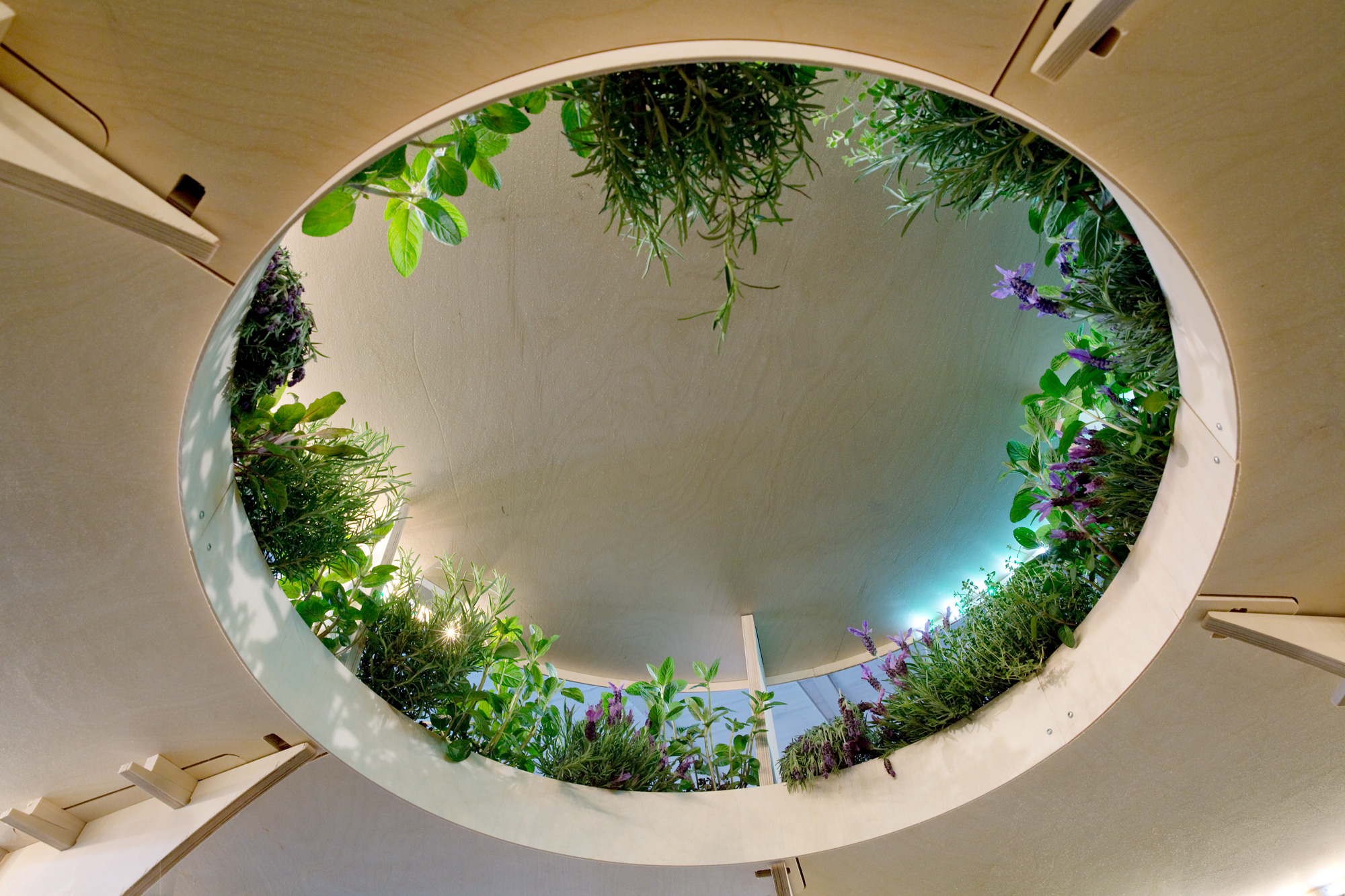 The curved inside of a multilevel, wooden plant stand filled with lush greenery.