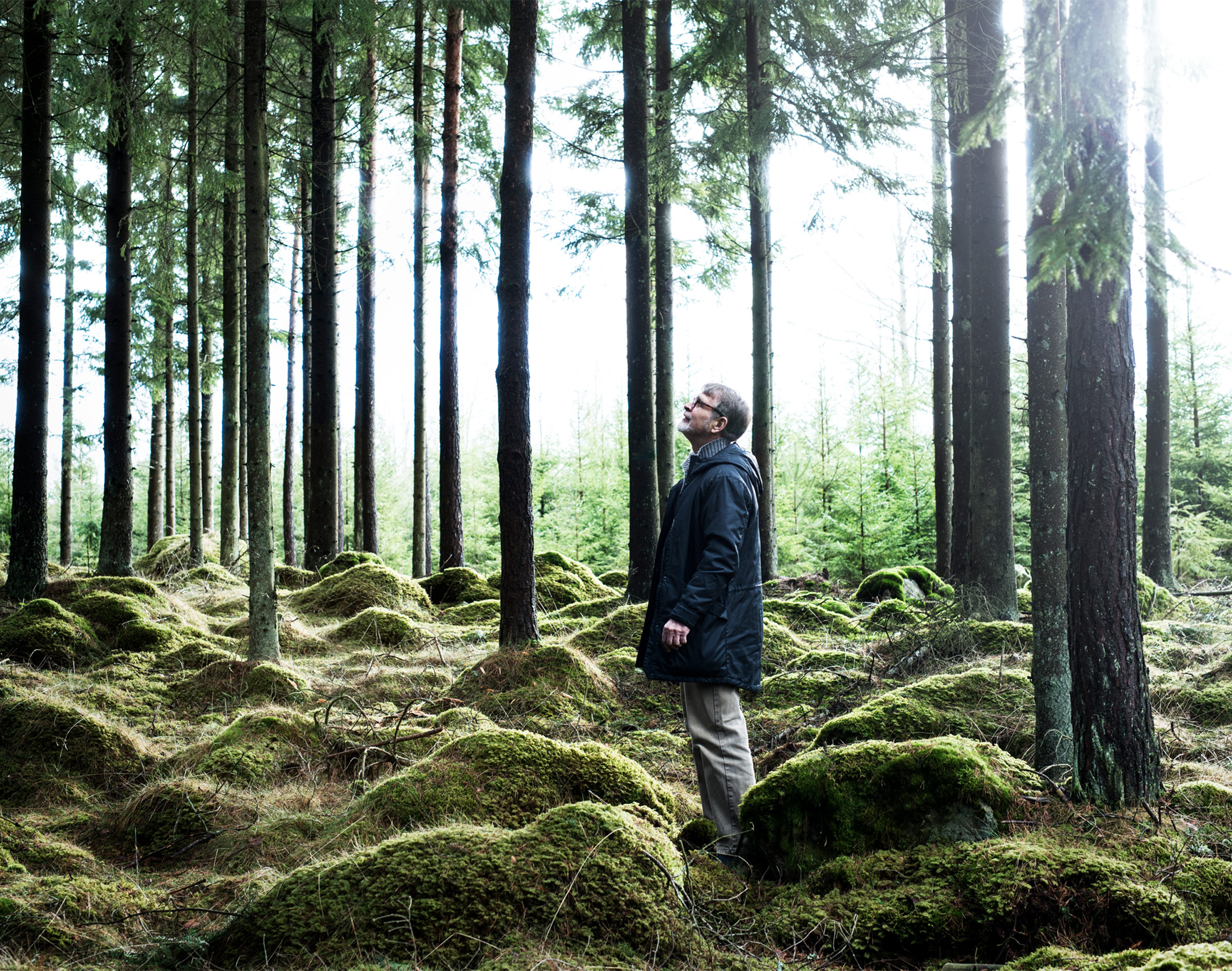 A man wearing a black parka jacket standing in a forest and looking up at the trees.
